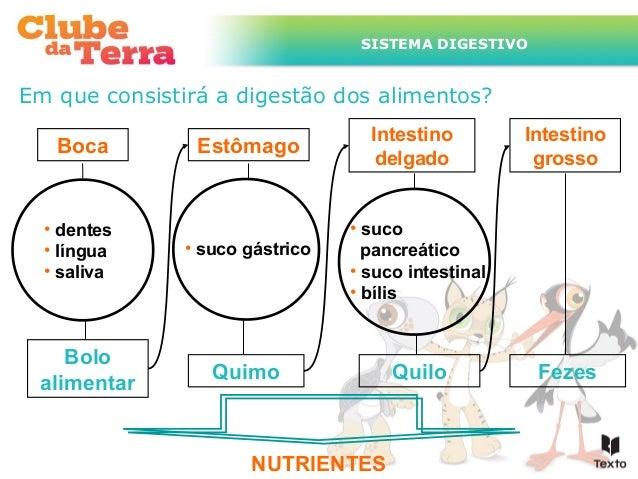 SISTEMA DIGESTIVO  Em que consistirá a digestão dos alimentos? Boca  • dentes • língua • saliva  Bolo alimentar  Estômago ...
