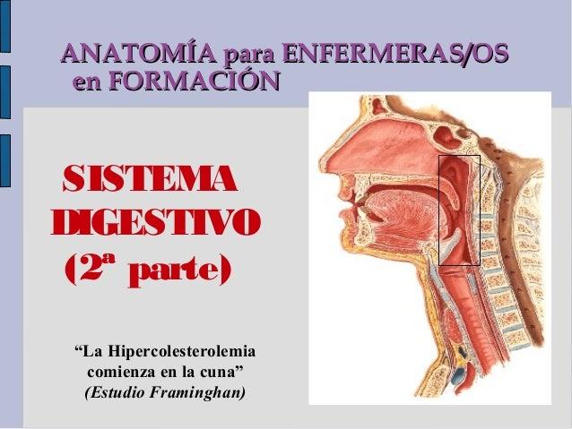 """ANATOMÍA para ENFERMERAS/OS en FORMACIÓNSISTEMADIGESTIVO (2ª parte) """"La Hipercolesterolemia  comienza en la cuna""""  (Estudi..."""