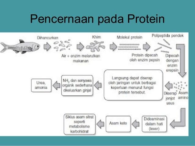 Materi Metabolisme (Katabolisme) dan Cara Mudah Menghafalkannya