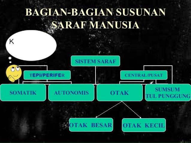Sistem Saraf Manusia Slide 3