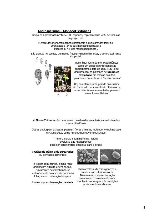 Angiospermas – Monocotiledôneas Grupo de aproximadamente 52 000 espécies, representando 22% de todas as angiospermas. Meta...