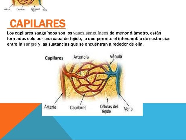Sistema cardiovascular for Como estan formados los suelos