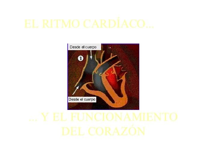 EL RITMO CARDÍACO... ... Y EL FUNCIONAMIENTO DEL CORAZÓN