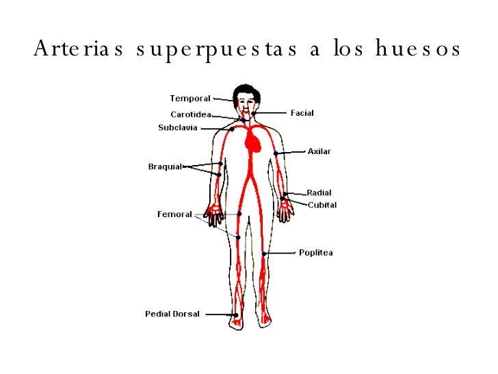 Sistema circulatorio del cuerpo humano