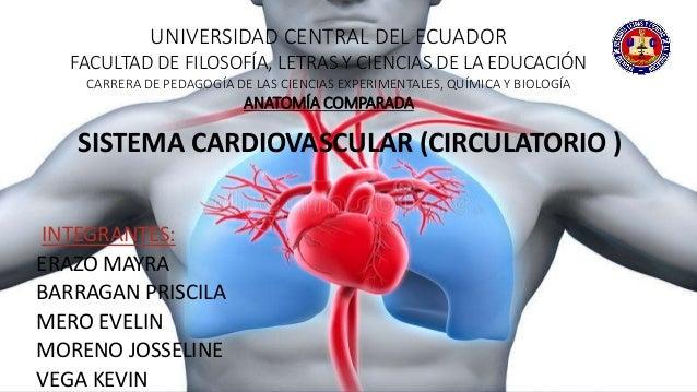 Circuito Circulatorio : Sistema circulatorio de los vertebrados
