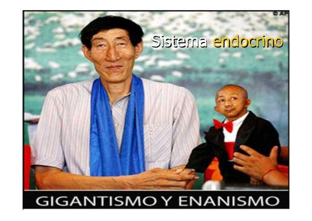 SistemaSistema endocrinoendocrino