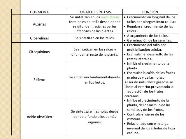 Sistema endocrino y hormonas vegetales for Hormonas en las plantas