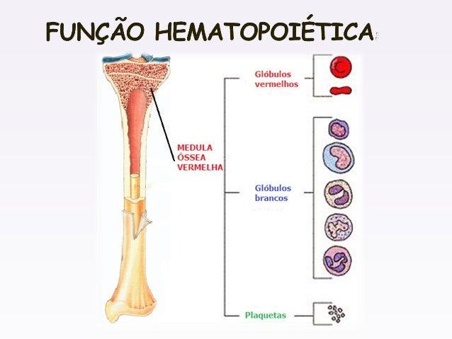 Sistema esqueletico for Esterno e um osso irregular