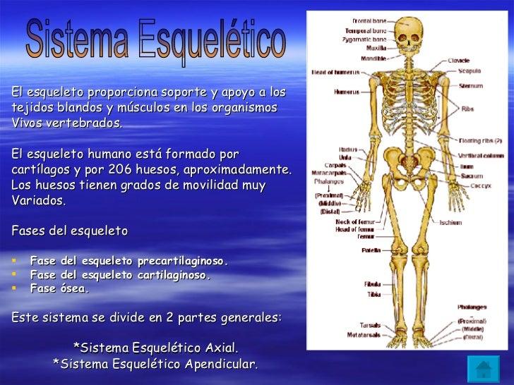 Sistema Esquelético y Muscular