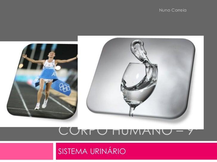 CORPO HUMANO – 9º  SISTEMA URINÁRIO Nuno Correia