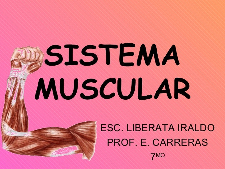 SISTEMA MUSCULAR ESC. LIBERATA IRALDO PROF. E. CARRERAS 7 MO
