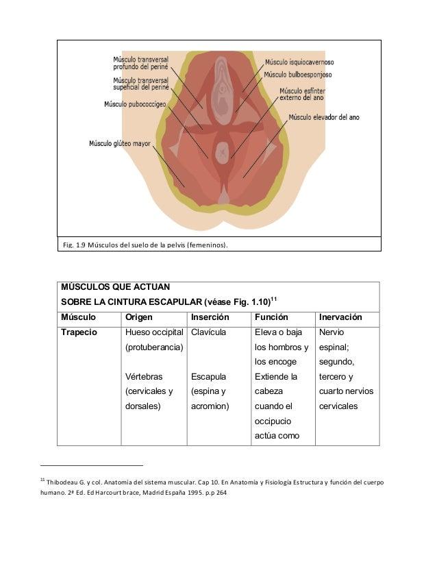 Sistema muscular UNFV