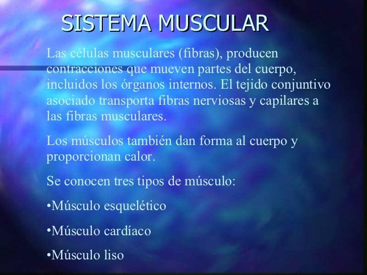 SISTEMA MUSCULAR <ul><li>Las células musculares (fibras), producen contracciones que mueven partes del cuerpo,  incluidos ...
