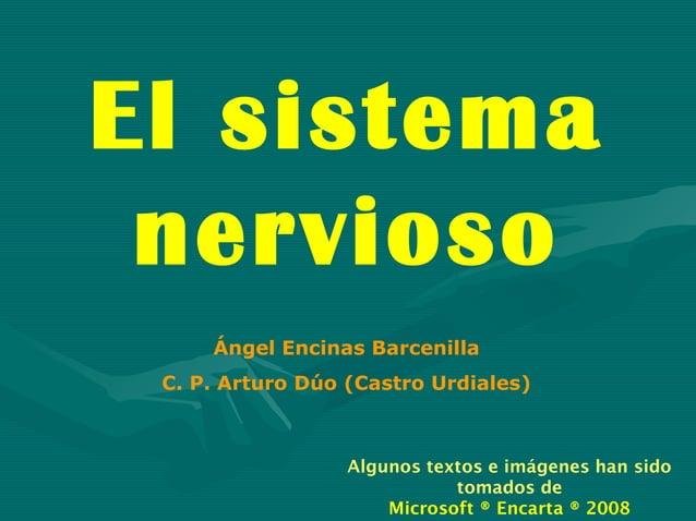 El sistema nervioso     Ángel Encinas Barcenilla C. P. Arturo Dúo (Castro Urdiales)                  Algunos textos e imág...