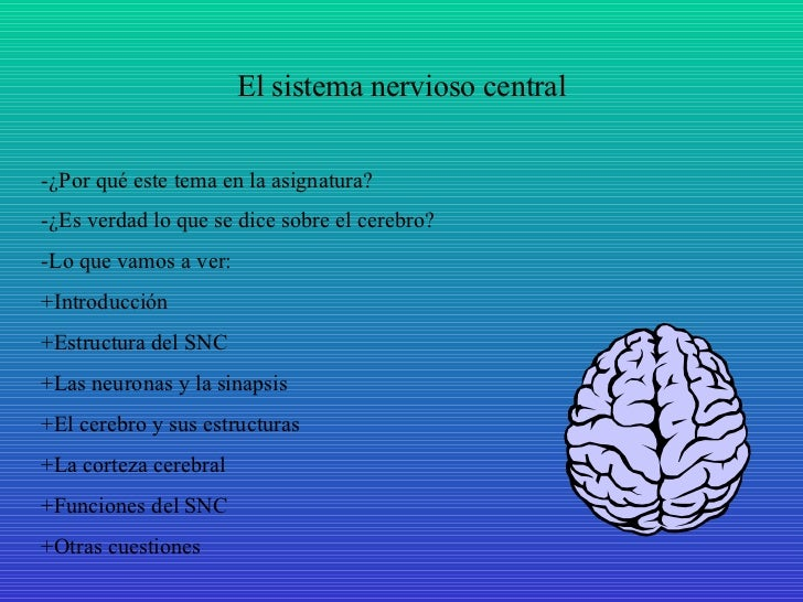 El sistema nervioso central -¿Por qué este tema en la asignatura? -¿Es verdad lo que se dice sobre el cerebro? -Lo que vam...