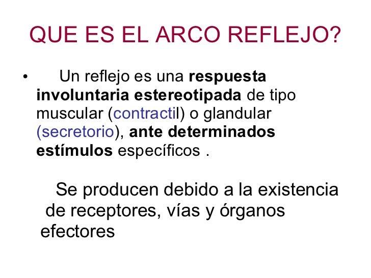 Lujoso Definición Anatomía Reflejo Imagen - Anatomía de Las ...
