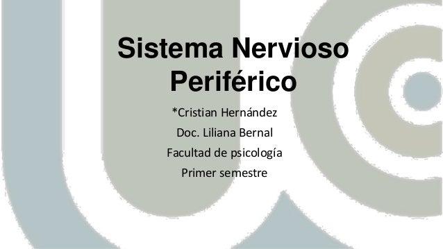 Sistema Nervioso Periférico *Cristian Hernández Doc. Liliana Bernal Facultad de psicología Primer semestre