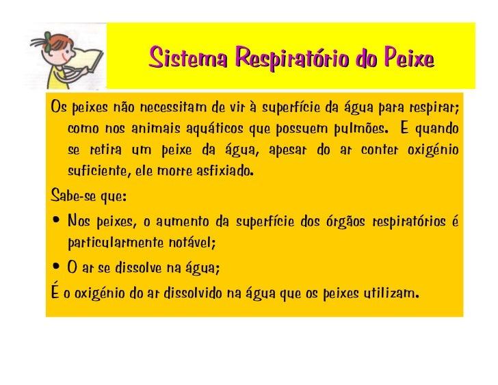 Sistema Respiratório do Peixe Os peixes não necessitam de vir à superfície da água para respirar;    como nos animais aquá...