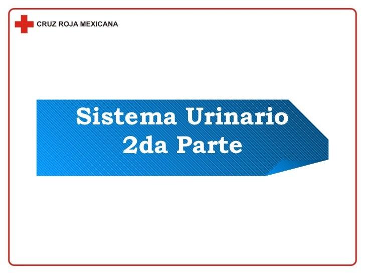 Sistema Urinario 2da Parte