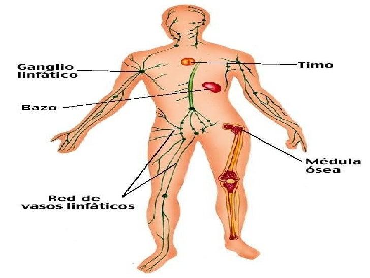 Sistema vascular-periferico.pp