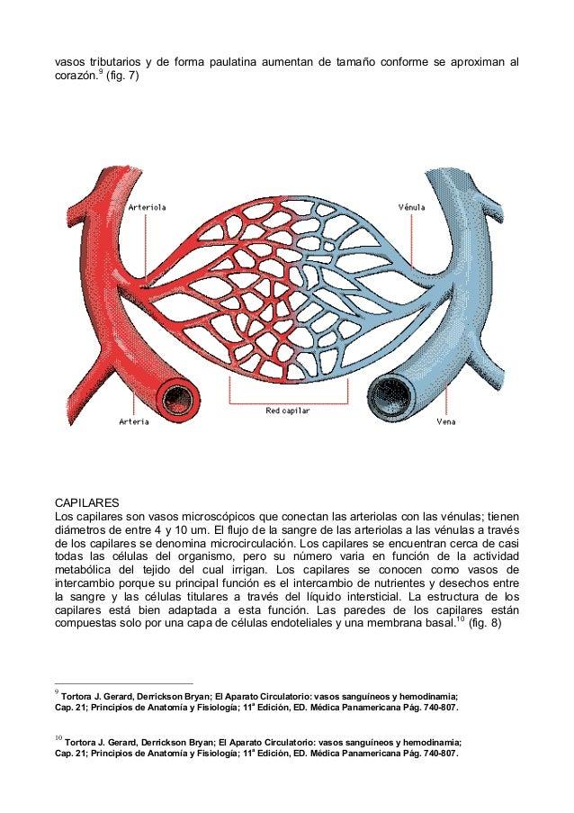 Contemporáneo Mcgraw Anatomía Y Fisiología Colina 7ª Edición Cresta ...
