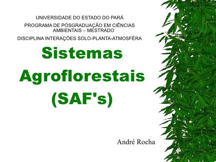 Sistemas Agroflorestais (SAF's) UNIVERSIDADE DO ESTADO DO PARÁ PROGRAMA DE PÓSGRADUAÇÃO EM CIÊNCIAS AMBIENTAIS – MESTRADO ...