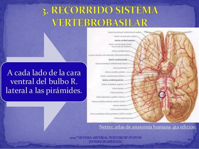 Sistema arterial posterior