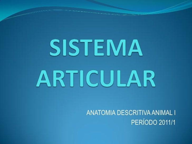 ANATOMIA DESCRITIVA ANIMAL I             PERÍODO 2011/1