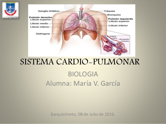 sistema cardio pulmonar