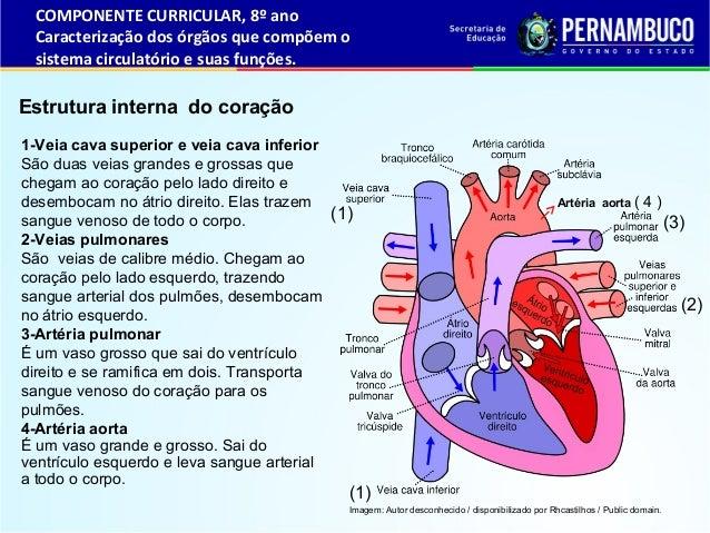 Sistema Cardivascular