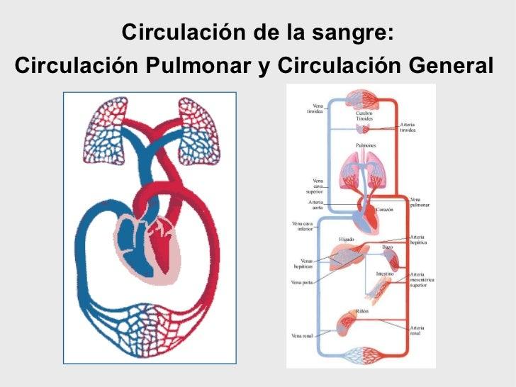 Circuito General : Sistema circulatorio