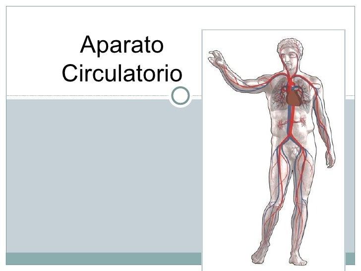 AparatoCirculatorio