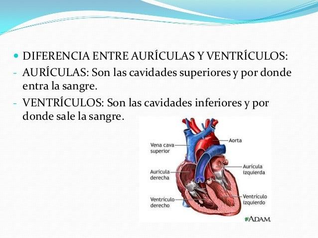 6-¿CÓMO ES LA CIRCULACIÓN DEL HOMBRE? DESCRIBELOS TIPOS DE CIRCULACIÓN QUE EXISTE. El sistema circulatorio humano, además...