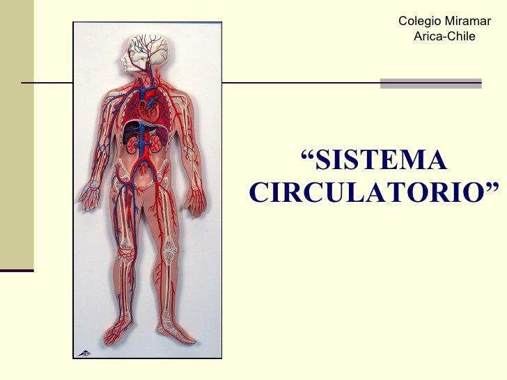 """"""" SISTEMA CIRCULATORIO"""" Colegio Miramar Arica-Chile"""