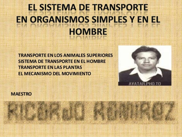 TRANSPORTE EN LOS ANIMALES SUPERIORES  SISTEMA DE TRANSPORTE EN EL HOMBRE  TRANSPORTE EN LAS PLANTAS  EL MECANISMO DEL MOV...