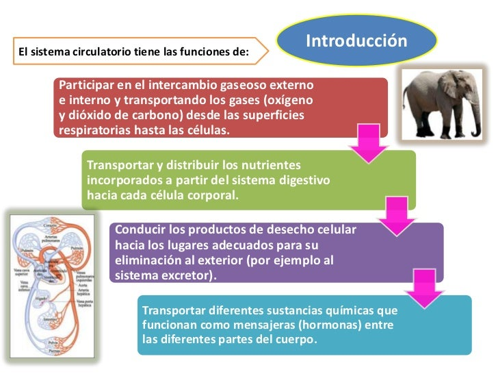Sistema circulatorio en mamiferos