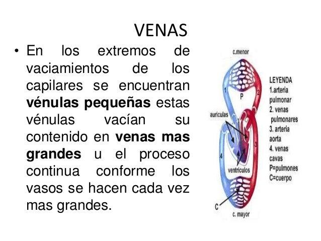 Se ve las venas violetas en los pies