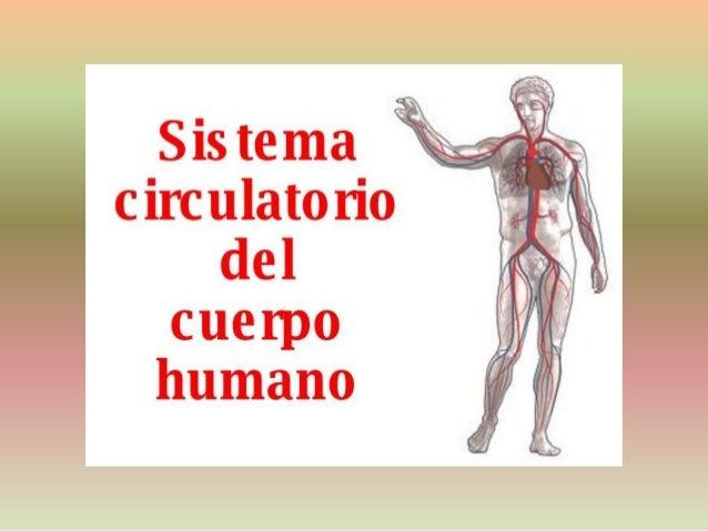 Sistema circulam rio del cuerpo humano