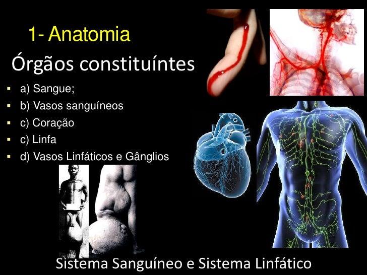 Dorable Anatomía Y Fisiología Del Sistema Circulatorio Ppt Galería ...
