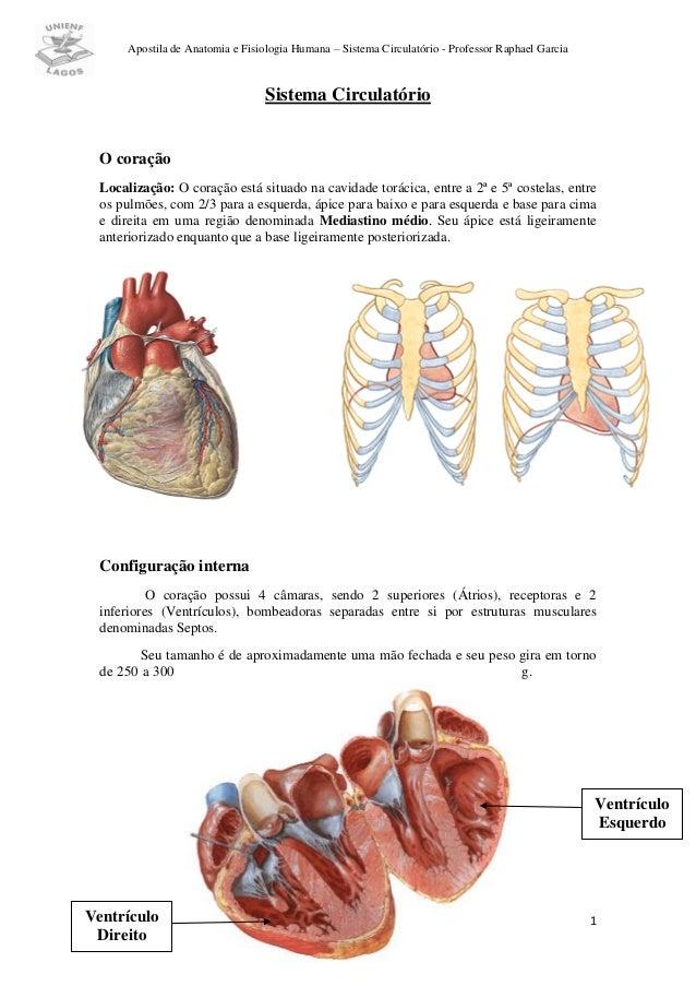 Apostila de Anatomia e Fisiologia Humana – Sistema Circulatório - Professor Raphael Garcia                                ...