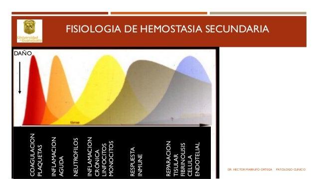 Sistema de coagulacion Slide 3