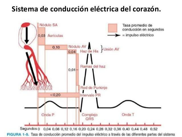 CONDUCCION ELECTRICA DEL CORAZON EPUB