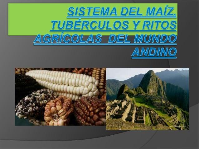 EL SISTEMA DE LOS TUBERCULOS En los pisos ecológicos alto-andinos los únicos cultivos nativos son la quinua y los tubércul...