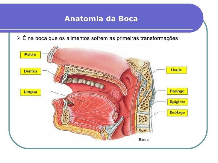 Excelente Boca Anatomía Cavidad Elaboración - Anatomía de Las ...