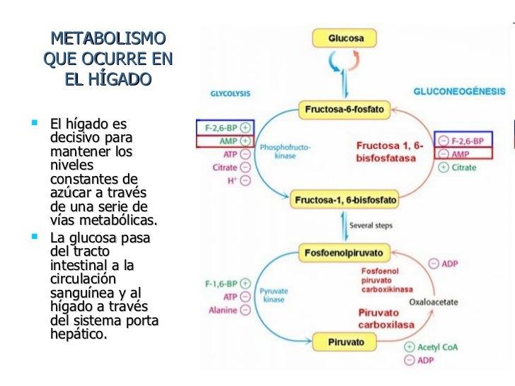 Breve guía de higado metabolismo
