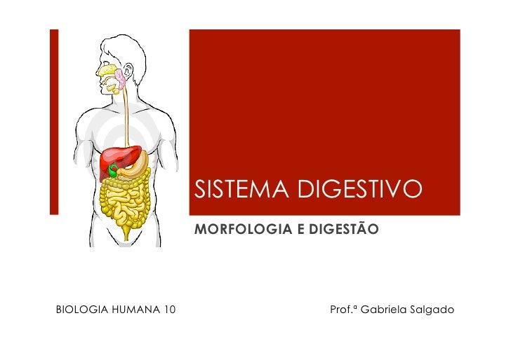 SISTEMA DIGESTIVO                      MORFOLOGIA E DIGESTÃO     BIOLOGIA HUMANA 10                  Prof.ª Gabriela Salga...
