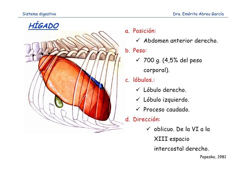 sistema-digestivo-36-728.jpg?cb=1317745029
