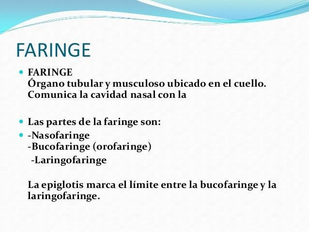 ESOFAGO  ESÓFAGO Es un tubo muscular de 20 cm, aproximadamente. Comunica la faringe con el estómago.  Presenta dos esfín...