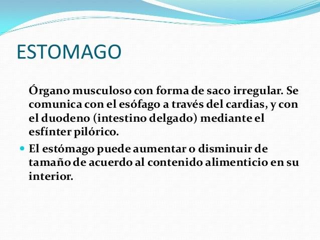 JUGO GASTRICO  El jugo gástrico está compuesto por agua, ácido clorhídrico y enzimas.  Dentro de estas enzimas están: El...