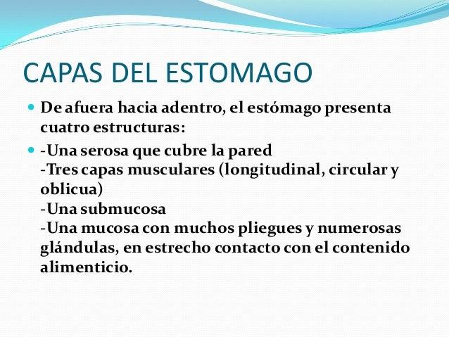 SECRECION DE JUGO GASTRICO  La secreción de ácido clorhídrico se estimula mediante: la masticación, la deglución, los ali...